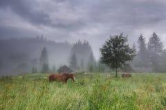 Paisaje rural con los caballos imagenes de archivo