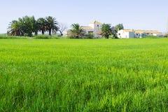 Paisaje rural con los campos del arroz imagen de archivo libre de regalías