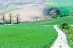 Paisaje rural con los campos y Roa moravian arados ondulados verdes Foto de archivo libre de regalías
