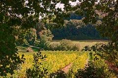 Paisaje rural con los viñedos Fotografía de archivo libre de regalías