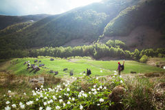 Paisaje rural de la montaña Imágenes de archivo libres de regalías