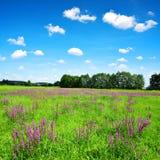 Paisaje rural de la primavera con las flores púrpuras en prado Imagenes de archivo