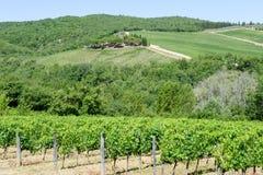 Paisaje rural de los viñedos de Chianti en Toscana foto de archivo libre de regalías