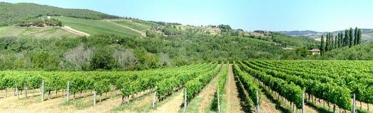 Paisaje rural de los viñedos de Chianti en Toscana fotografía de archivo libre de regalías