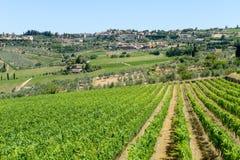 Paisaje rural de los viñedos de Chianti en Toscana imágenes de archivo libres de regalías