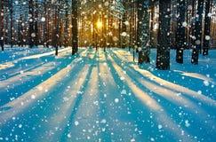 Paisaje rural del invierno con el bosque, el sol y la nieve Imagenes de archivo