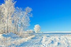 Paisaje rural a del invierno con el cielo azul, un campo y la delantera Foto de archivo libre de regalías