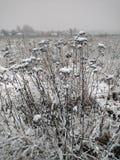 Paisaje rural del invierno en la zona media de Rusia Fotografía de archivo