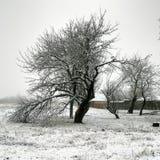 Paisaje rural del invierno en la zona media de Rusia Imagenes de archivo