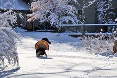 Paisaje rural del invierno hermoso Imagen de archivo libre de regalías