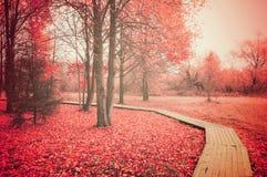 Paisaje rural del otoño Imagenes de archivo