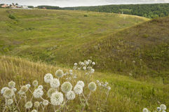 Paisaje rural del verano Fotografía de archivo