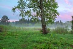 Paisaje rural del verano con el bosque, un prado y niebla en la salida del sol Foto de archivo