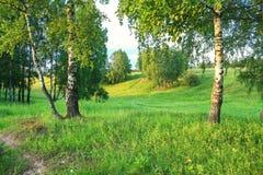 Paisaje rural del verano con el bosque y el prado en puesta del sol abedul Imágenes de archivo libres de regalías