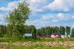 Paisaje rural del verano Las malas hierbas numerosas y el árbol de abedul joven en el campo se encendieron por luz del sol Foto de archivo