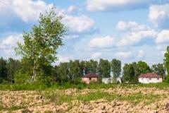Paisaje rural del verano Las malas hierbas numerosas y el árbol de abedul joven en el campo se encendieron por luz del sol Imagen de archivo libre de regalías