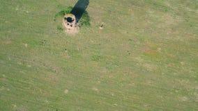 Paisaje rural del verde de la visión aérea metrajes