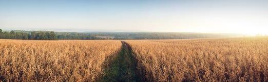 Paisaje rural en el amanecer con los campos de la avena Foto de archivo
