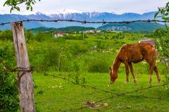 Paisaje rural en el fondo de montañas Imagen de archivo