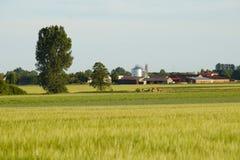 Paisaje rural en la opinión del fondo de los edificios foto de archivo libre de regalías