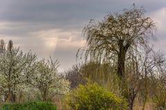 Paisaje rural en primavera Fotos de archivo