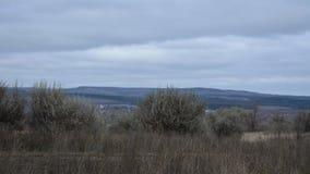 Paisaje rural en Rusia Día cubierto del otoño Silverberry arbustos, hierbas secas, colinas con el bosque Imágenes de archivo libres de regalías