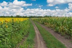 Paisaje rural en Ucrania central Foto de archivo libre de regalías