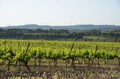 Paisaje rural español con una plantación de la vid Foto de archivo