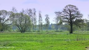 Paisaje rural, europeo metrajes