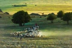 Paisaje rural hermoso con el pastor y las ovejas en la primavera Fotografía de archivo libre de regalías