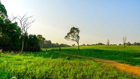 Paisaje rural hermoso del campo de hierba verde con la carretera nacional polvorienta y de árboles en la colina y el cielo azul d Fotos de archivo