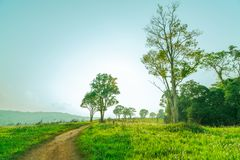 Paisaje rural hermoso del campo de hierba verde con las flores blancas y la carretera nacional polvorienta y de árboles en la col Foto de archivo libre de regalías