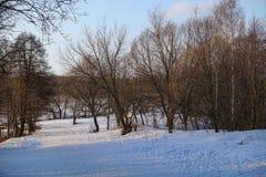 Paisaje rural hermoso Resorte temprano Los árboles son encendidos por el sol Nieve y cielo azul Rusia marzo imagen de archivo libre de regalías