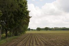 Paisaje rural holandés con los campos de la patata Fotografía de archivo libre de regalías