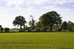 Paisaje rural holandés con los campos de la patata Foto de archivo