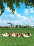Paisaje rural holandés de la primavera