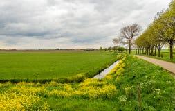 Paisaje rural holandés en la estación de primavera Foto de archivo