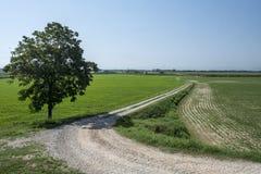 Paisaje rural a lo largo de la trayectoria del ciclo del Po Fotografía de archivo libre de regalías