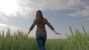 Paisaje rural, muchacha del granjero en camisa a cuadros que camina en cebada del campo y tactos la planta con su mano en fondo almacen de metraje de vídeo