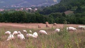Paisaje rural. Toscana metrajes