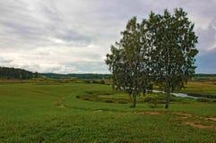 Paisaje ruso con dos árboles Imagen de archivo libre de regalías