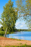Paisaje ruso del verano con un abedul cerca del río Volga Fotografía de archivo