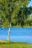 Paisaje ruso del verano con un abedul cerca del río Volga Foto de archivo