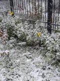 Paisaje ruso en invierno Fotos de archivo