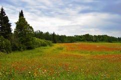 Paisaje salvaje calmante llenado de colores naturales La ubicación, 3 millas del oeste a la orilla del norte ejerce la actividad  foto de archivo