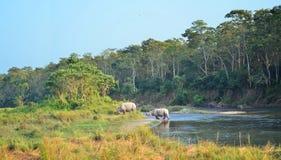 Paisaje salvaje con los rinocerontes asiáticos Imagen de archivo libre de regalías