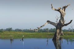 Paisaje salvaje en el tiempo de mañana Parque nacional de Udawalawe en Sri L Imagen de archivo libre de regalías