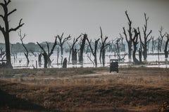 Paisaje salvaje en el tiempo de mañana Parque nacional de Udawalawe en Sri L Foto de archivo libre de regalías