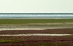 Paisaje secado de la estepa del lago Foto de archivo