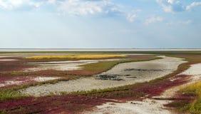 Paisaje secado de la estepa del lago Imagen de archivo libre de regalías